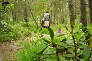 Тропа в лесу меж сосен и рододендрона