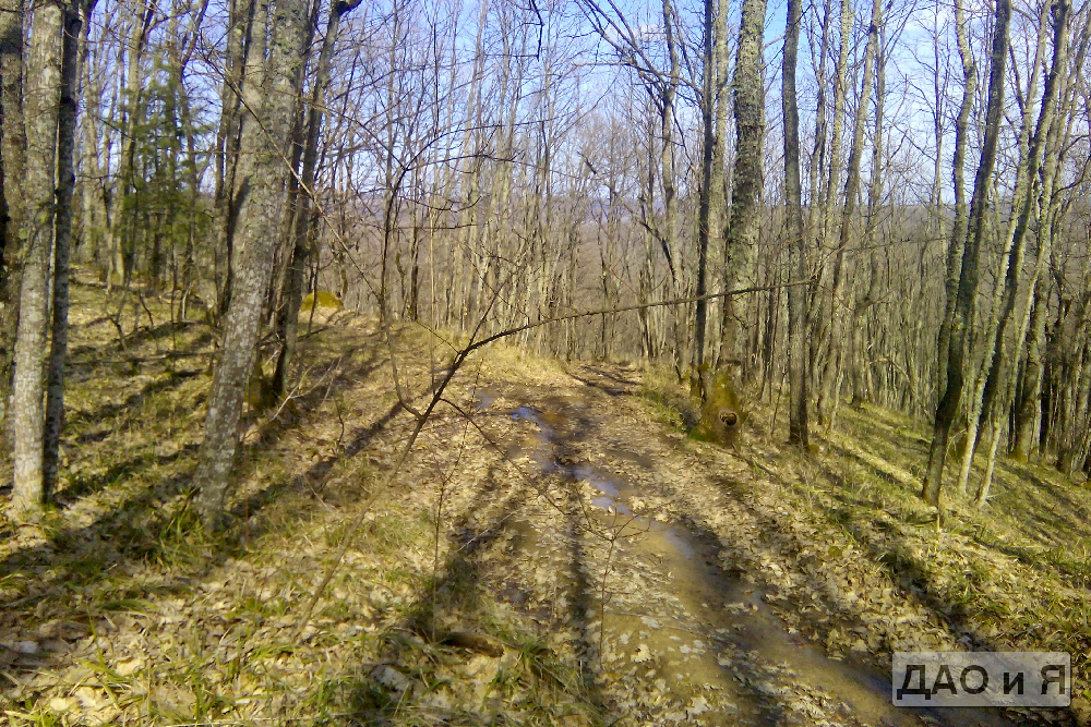Лесные дороги весной