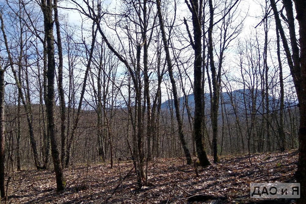 Горы сквозь лес