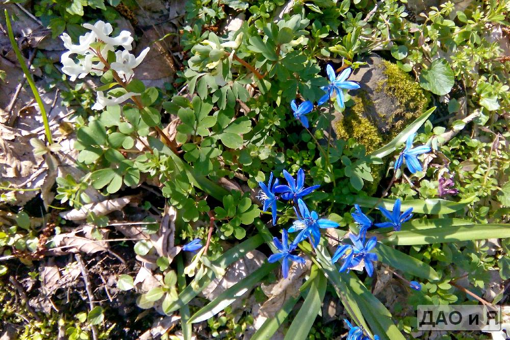 Весенние лесные цветы